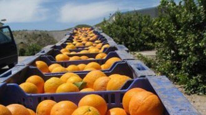 España, octavo exportador mundial de productos agroalimentarios