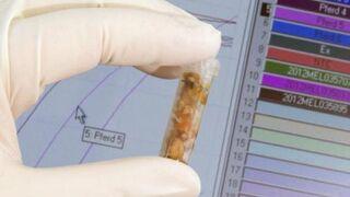 ADN equino en 4 de cada 100 muestras de carne analizadas