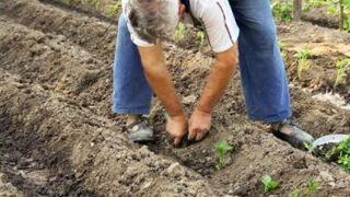 Bruselas planea un nuevo marco legal para la agricultura ecológica