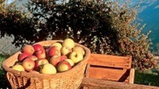VOG espera la mayor cosecha de manzana de los últimos años