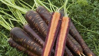 Zanahorias púrpuras vintage