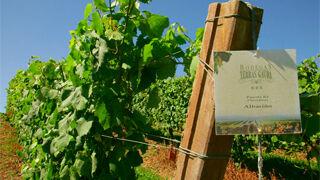 Terras Gauda participa en un proyecto sobre viticultura avanzada
