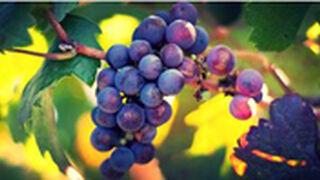 La producción de vino y mosto baja el 22,3% en 2014