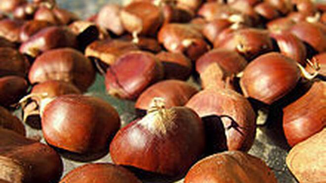 Mercadona compró 600.000 kilos de castaña en Extremadura
