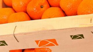 Carrefour acuerda vender cítricos valencianos en Francia