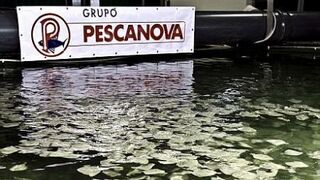 La banca inyectará 150 millones en octubre a Pescanova