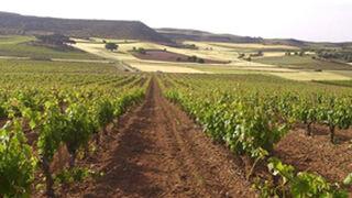 Bodegas Torres quiere elaborar un vino icónico en Ribera del Duero