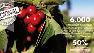 Mercadona comprará 6.000 toneladas de cerezas, el 50% más