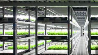 Robots 'despiden' a los agricultores en una finca de Japón