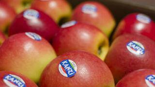 Buena campaña para las manzanas Kanzi, que suben el 30% sus ventas