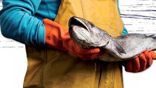Alcampo y MSC se unen para concienciar sobre la pesca sostenible