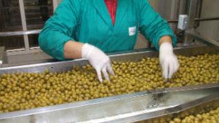 Dcoop integra a la envasadora de aceitunas y conservas Acyco