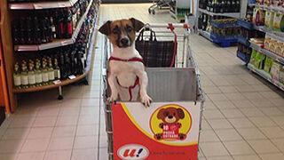 Carritos adaptados: las mascotas ya pueden hacer la compra