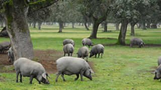 España, primer país de la UE que exportará carne de porcino a México