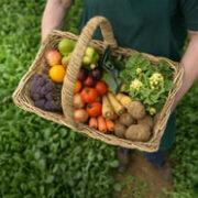Agricultura regenerativa ¿Es lo mismo que la agricultura ecológica?