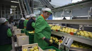 Nufri pondrá nombres populares a 10 millones de sus manzanas