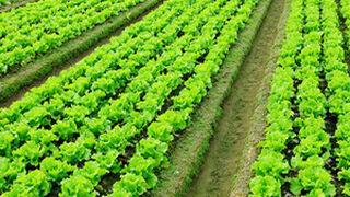 En busca de la transformación digital en el sector agroalimentario