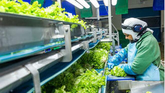 Citrus, proveedor de Mercadona, elevó sus ventas el 38%