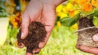 Amazon abre su tienda de semillas y plantas con más 5.000 productos