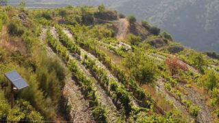 La tendencia por lo saludable, al alza en el mundo de los vinos