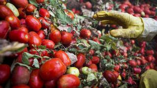 Los tomates y las frutas sin hueso no pasan por su mejor momento