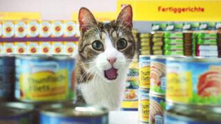 Humor y gatos en un vídeo viral de una cadena de supermercados