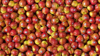 Crece la demanda de manzanas Kanzi en España e Italia
