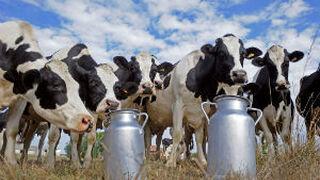 Bruselas pagará 14 cts. por litro por reducir la producción de leche