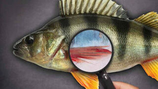 """El preocupante """"fraude"""" y """"timo"""" del mal etiquetado del pescado"""