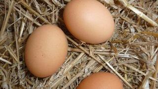Les Mousquetaires y Netto: no a los huevos de gallinas enjauladas