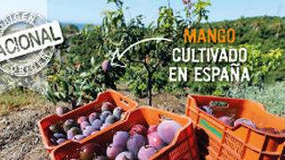 Mercadona pone en marcha la campaña de mango nacional