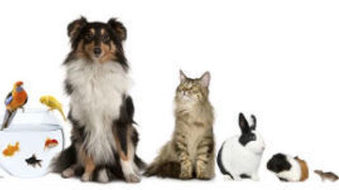 Las mascotas: un sector clave en el desarrollo del consumo en España