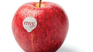 Empieza la cosecha de la manzana 'supersweet' envy