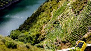 ¿Cómo ayudan los drones a mejorar el control de los viñedos?