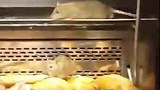Una panadería de Granier, cerrada por tener ratas en sus mostradores