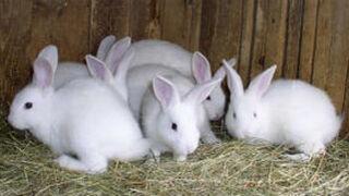 """UPA denuncia la """"pavorosa bajada"""" del precio del conejo"""