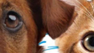 Mars compra la empresa de cuidados veterinarios VCA