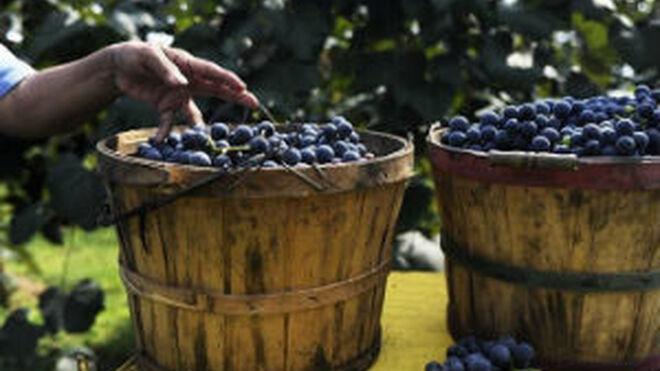 La producción de vino y mosto supera los 42 millones de hectólitros