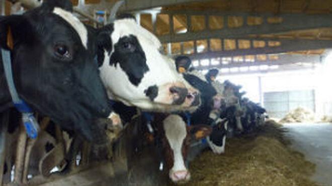 Las granjas gallegas tendrán un nuevo sistema de gestión TIC