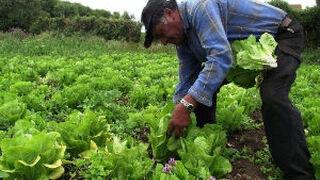 La ola de frío reduce el 30% la producción de hortalizas