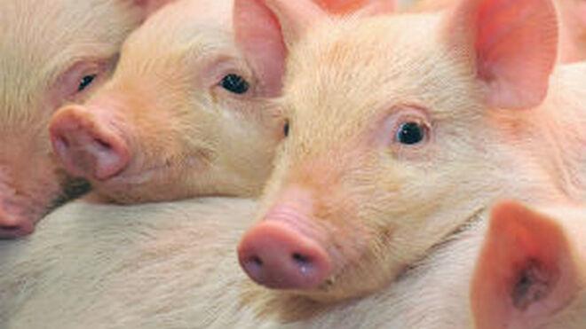"""2016: """"año histórico"""" para las exportaciones de porcino español"""