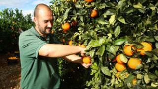 España pide más ayudas a la UE para frutas y hortalizas