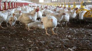 La industria avícola se beneficiará de la innovación en sus envases