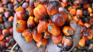 Alcampo y Simply eliminarán el aceite de palma en sus MDD