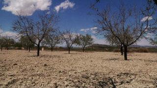 UPA alerta de la grave sequía que asola España