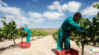 Luzón logra el certificado de bodega medioambientalmente sostenible