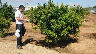 Genesis Innovation Group, lo último en gestión de vegetales protegidos