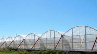 Vegetales Línea Verde amplía el 50% su superficie cultivable