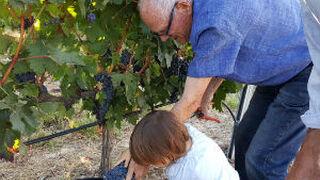 Pasaporte a la Ribera del Duero para 'turistear' con el vino