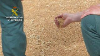 La Guardia Civil esclarece el robo de más de 900 toneladas de trigo